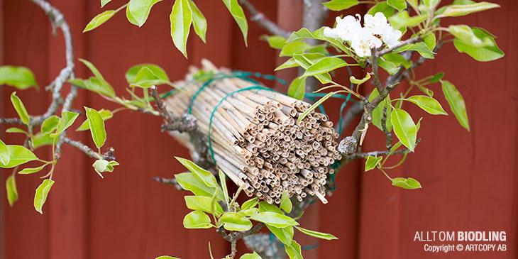 Insektshotell av vass