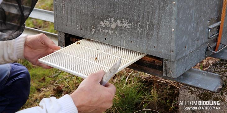 Biodling - Varroabekämpning på våren