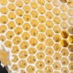 Regler för honung