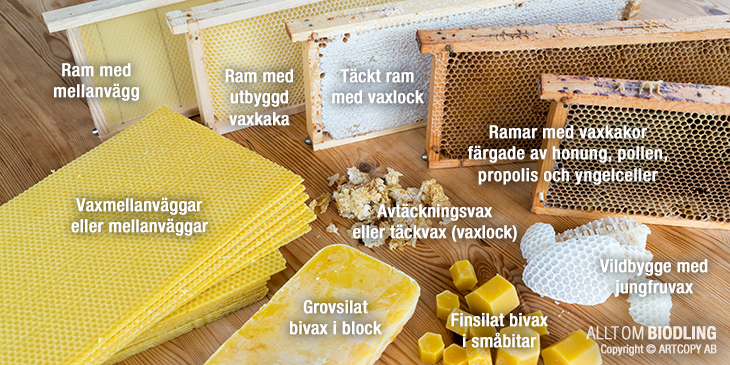 Bivax - Vaxkaka - Mellanväggar - Avtäckningsvax