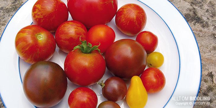 """När jag lämnar Martin så visar han mig en skål tomater. 5 - 6 olika sorter som han odlar för eget behov. Han säger """"Tänk dig att bara få äta en sorts tomater – det samma gäller honungen""""."""