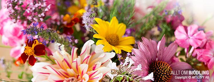 Plantera biväxter - blommor för bin