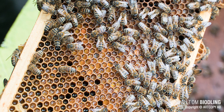 Pollenramar - Pollenram - Biodling