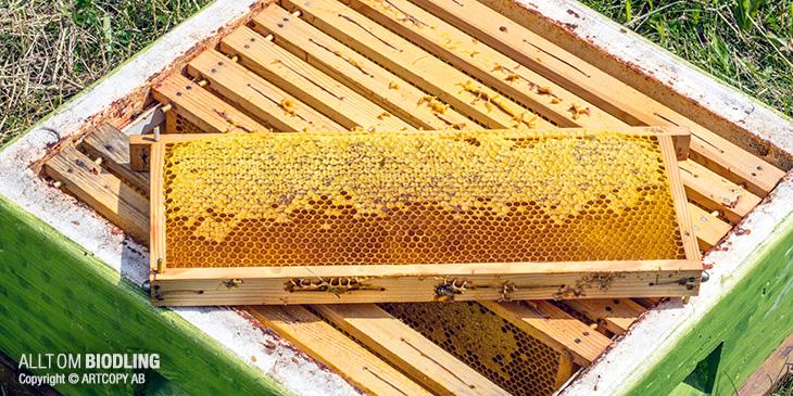 Skattning - Honungsskörd