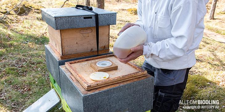 Stödfodring och drivfodring på våren