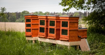 Thermosolar hive