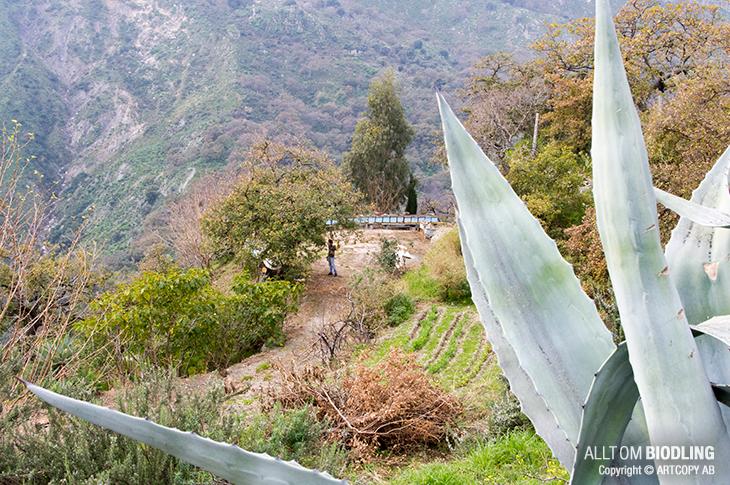 Yrkesbiodlarresa - Sicilien