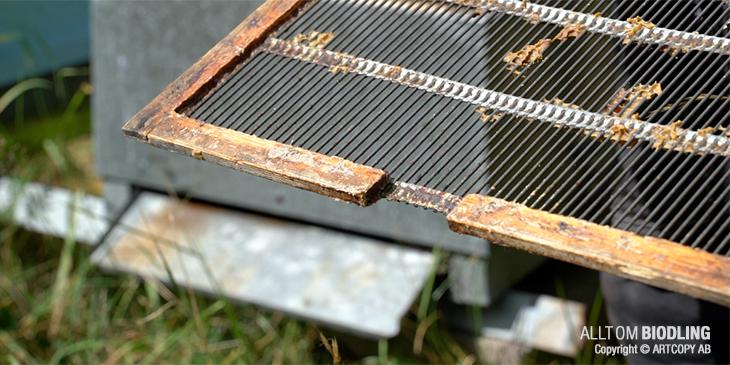 Drönartömmare, drönarutsläpp eller drönargång - Biodling