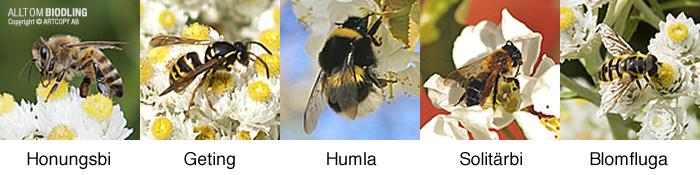Honungsbi förväxling