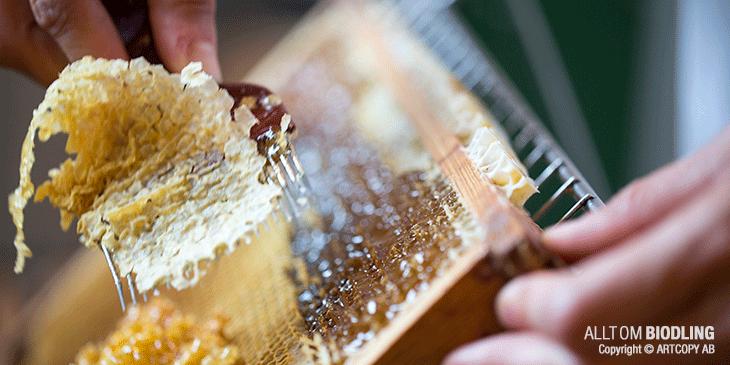 Honungshantering - Biodling - Honung