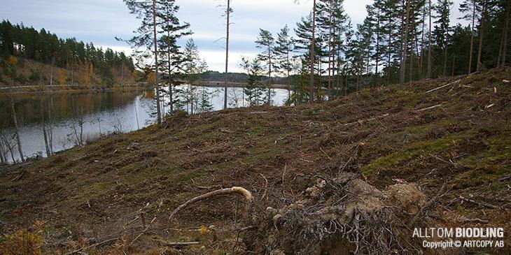 Hygge - Kalhygge - Skog - Biodling