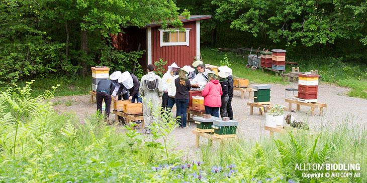 Nybörjarkurs i biodling - Kurs Kurser Biodlare