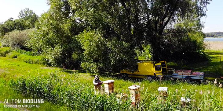 Lugnets Bigårdar - Ekologisk Biodling & Honung - KRAV