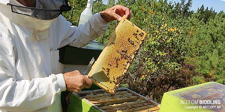 Plockskattning - Skattning - Honungsskörd - Biodling