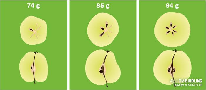 Pollinering–fruktsättning
