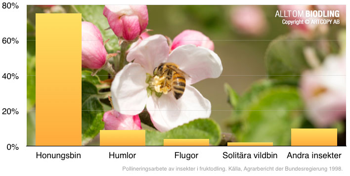 Pollineringsarbete av insekter i fruktodling